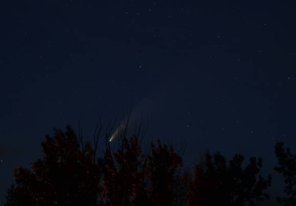 Comet Neowise through trees